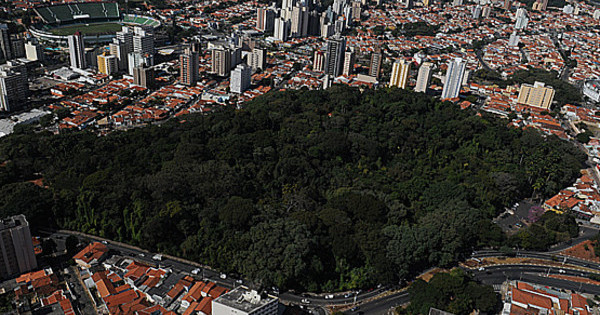 Resultado de imagem para bosque dos jequitibás